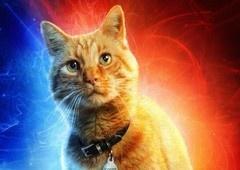 Capitã Marvel | Brinquedo revela spoiler sobre o gato Goose
