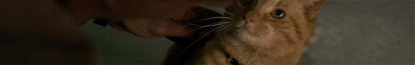 Capitã Marvel | Marvel divulga vídeo dedicado ao gato da heroína!