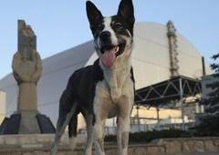 Chernobyl | O que realmente aconteceu com todos aqueles cachorros?