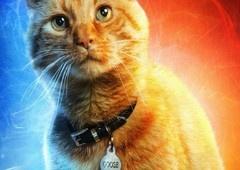 Conheça Goose, o espetacular gato da Capitã Marvel!