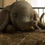 Dumbo | Sneak Peek mostra elefantinho voando pelo circo!