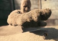 Homem-Areia pode aparecer no UCM após Homem-Aranha: Longe de Casa [TEORIA]