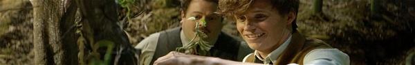 Tudo sobre Newt Scamander de Animais Fantásticos e Onde Habitam