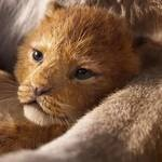 O Rei Leão: Trailer de live-action é o 2º mais assistido em 24h!